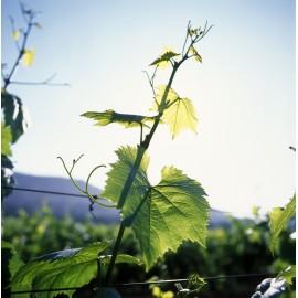 Lot n°2 - Vins Blancs de la Côte Chalonnaise