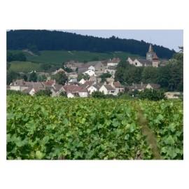 Les vins rouges de Monthélie