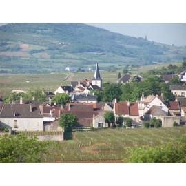 Les vins de Chassagne - Montrachet