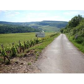 Les vins de Saint - Aubin