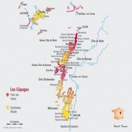 Bourgogne Chardonnay 2011 - Magnum 1,5 L