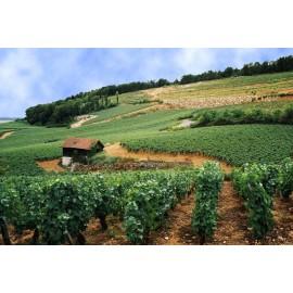 Les vins des Hautes - Côtes
